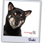 Family Profiles_Suki
