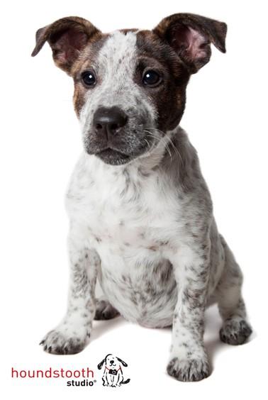 Innocent Puppy
