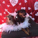 14 - Mabel & Cosette