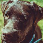 Baxter4